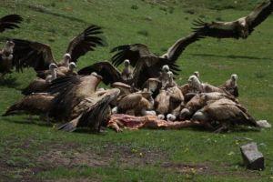 tibetan-sky-burial-1
