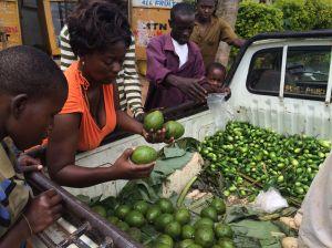 Jane choosing avocadoes